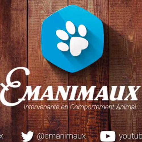 Vidéo - Comportement Animal